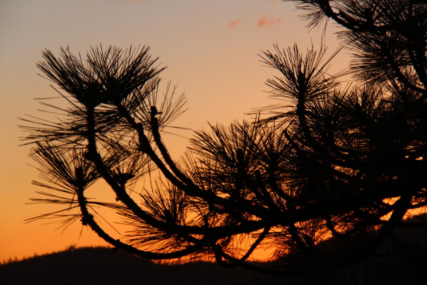 优胜美地的日落。公园占地75万英亩。是世界遗产。