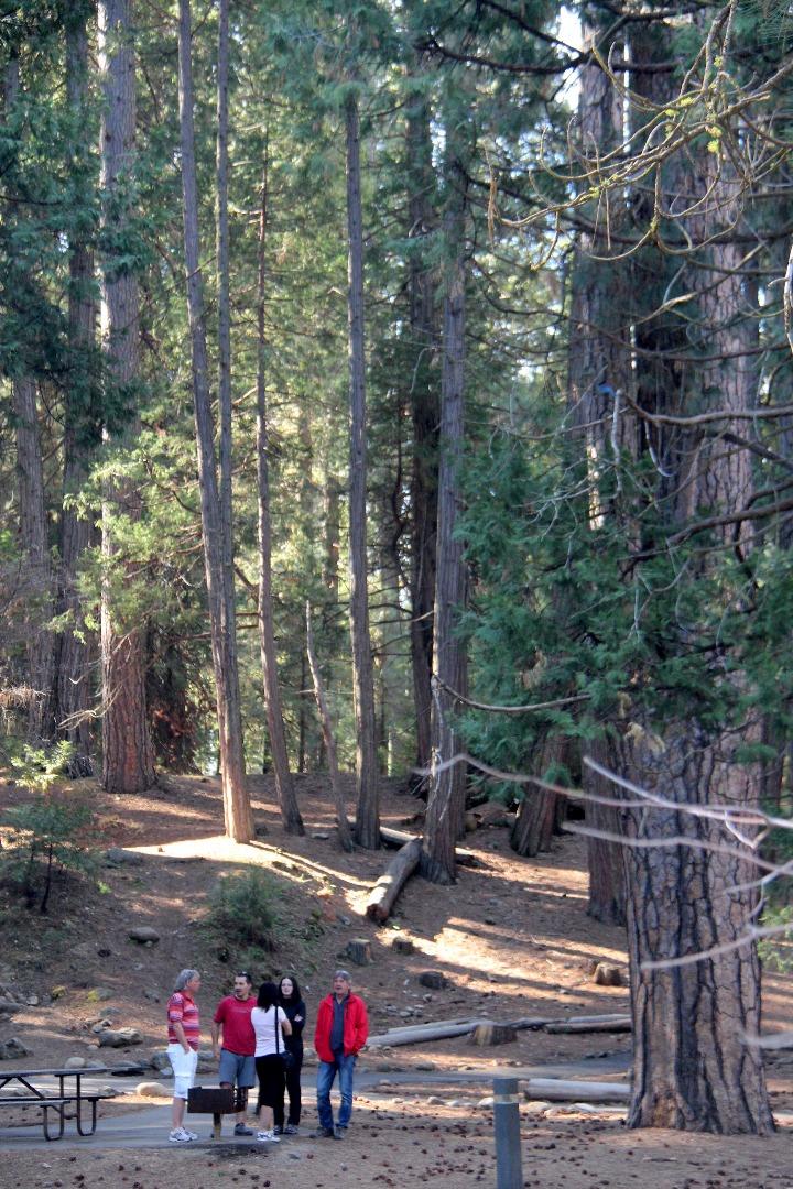 公园里生长着黄松,香柏,杉木和巨型红杉。